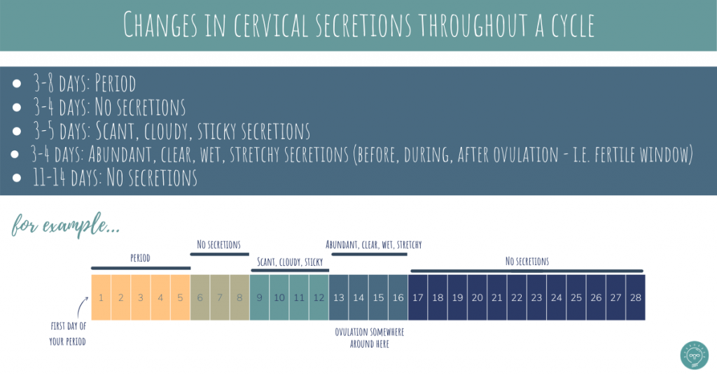 cervical secretions or cervical mucus throughout a cycle